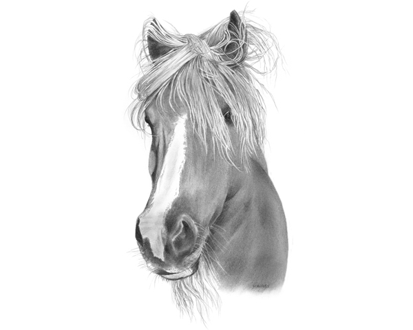 Custom Horse Portraits - Merry